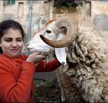 Eid al ADHA / Fiesta del sacrificio